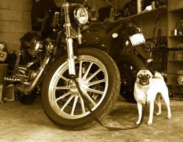 I Miss My Harley
