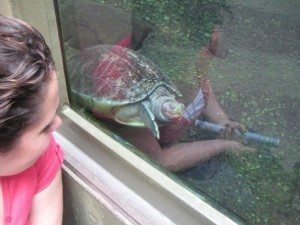 Shh! Turtles sleeping!