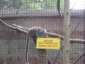 Caution: angry monkeys!