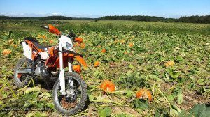 Where KTMs are grown?
