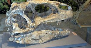 Allosaurus Skull - Colorado Motorcycle Ride