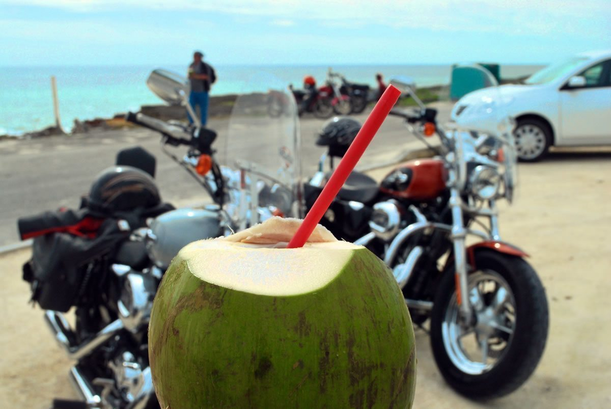 Coconut & bikes by the sea